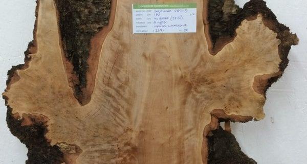 NEW STOCK 13.1.16 Burr Alder, Ash, Cherry, Holly, Laburnum, Sycamore, Walnut