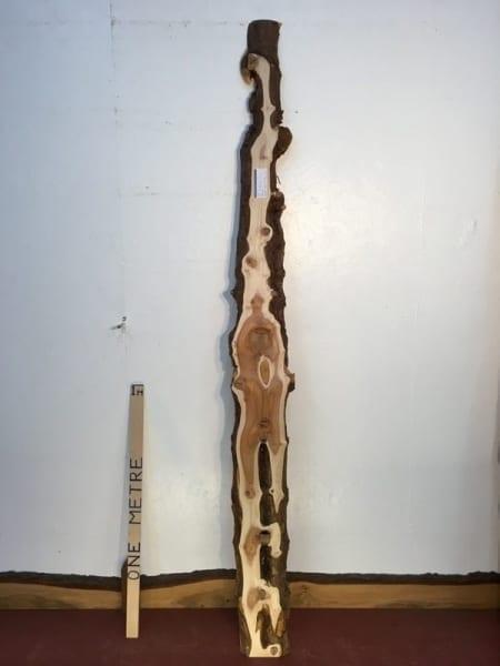YEW 3cm thick - tree number 1448C Natural Waney Live Edge Slab Wood Board Kiln Dried Planed Seasoned Hardwood Wildwood