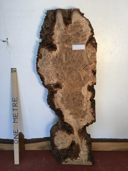 BURR OAK 4.7cm thick - tree number 1008A- Natural Waney Live Edge Slab Board Kiln Dried Planed Seasoned Hardwood Wildwood Coffee Table Top