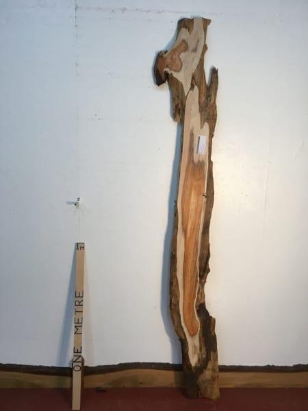 YEW 1511-7 Natural Waney Live Edge Slab Wood Board thickness 4cm Kiln Dried Planed Seasoned Hardwood Wildwood