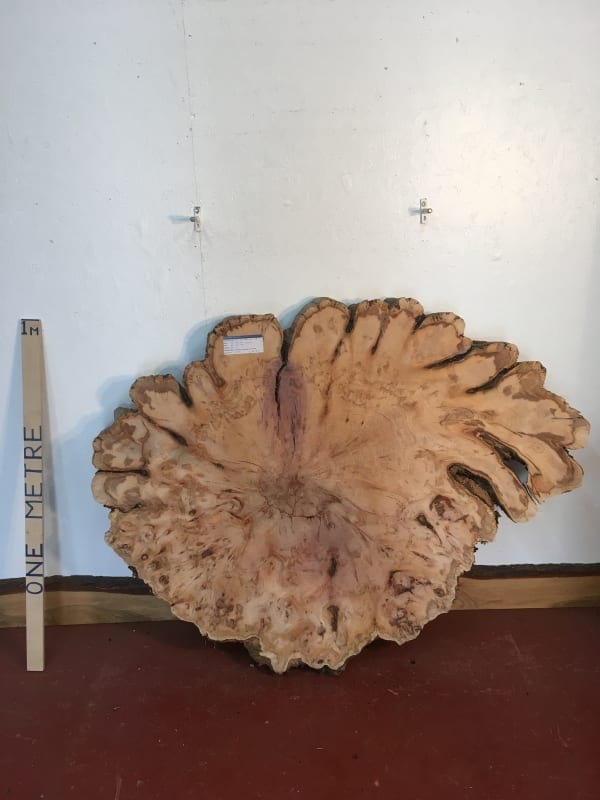 YEW TREE SLICE 0916-7 Natural Waney Live Edge Slab Wood Board thickness 9cm Kiln Dried Planed Seasoned Hardwood Wildwood Coffee Tabletops