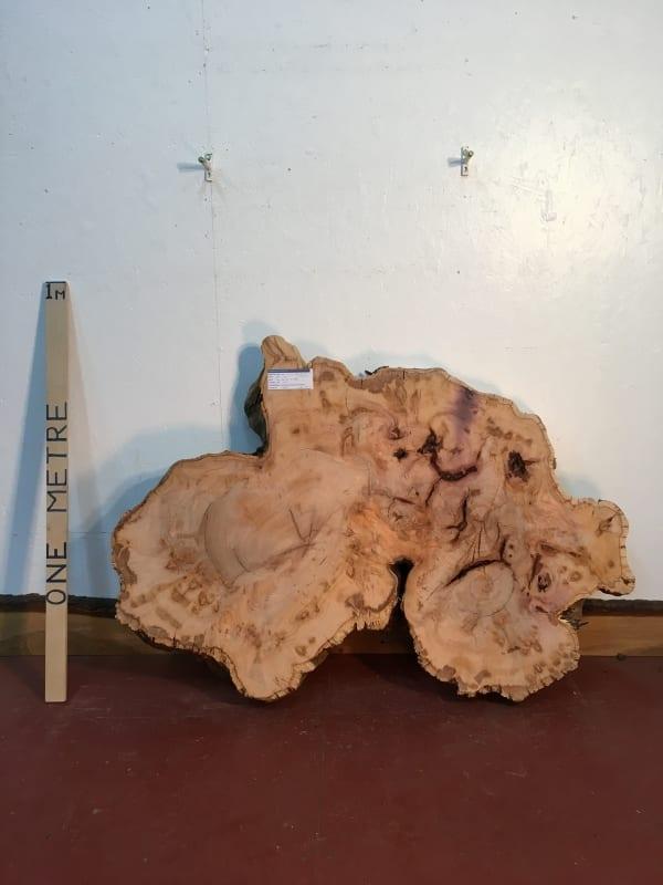 YEW TREE SLICE Natural Waney Live Edge Slab Wood Board 0916-14
