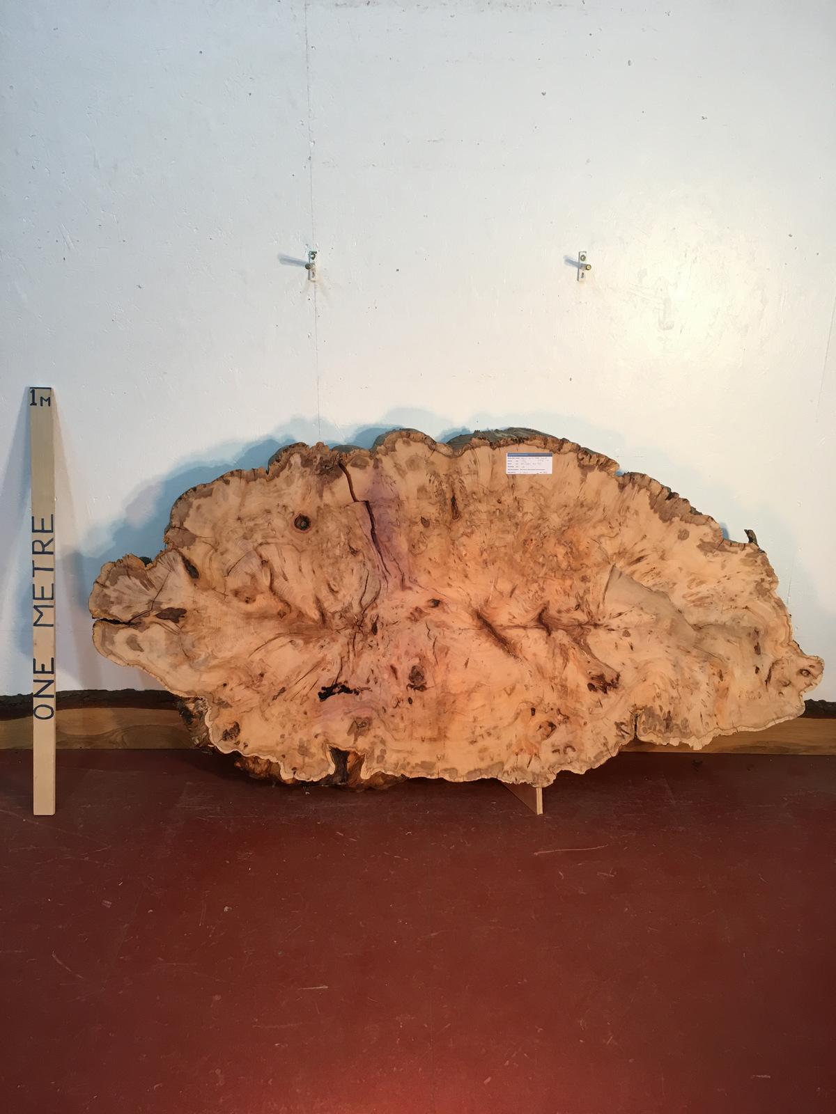 YEW TREE SLICE Natural Waney Live Edge Slab Wood Board 0916-10
