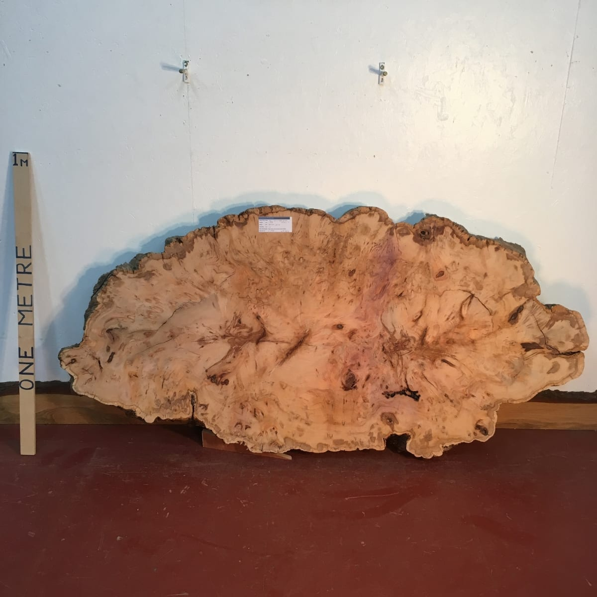 YEW TREE SLICE Natural Waney Live Edge Slab Wood Board 0916-11