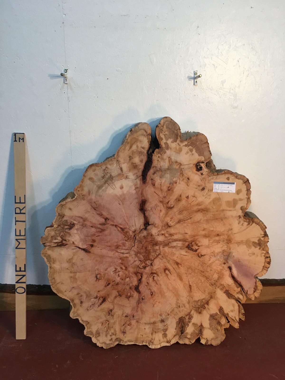 YEW TREE SLICE Natural Waney Live Edge Slab Wood Board 0916-3