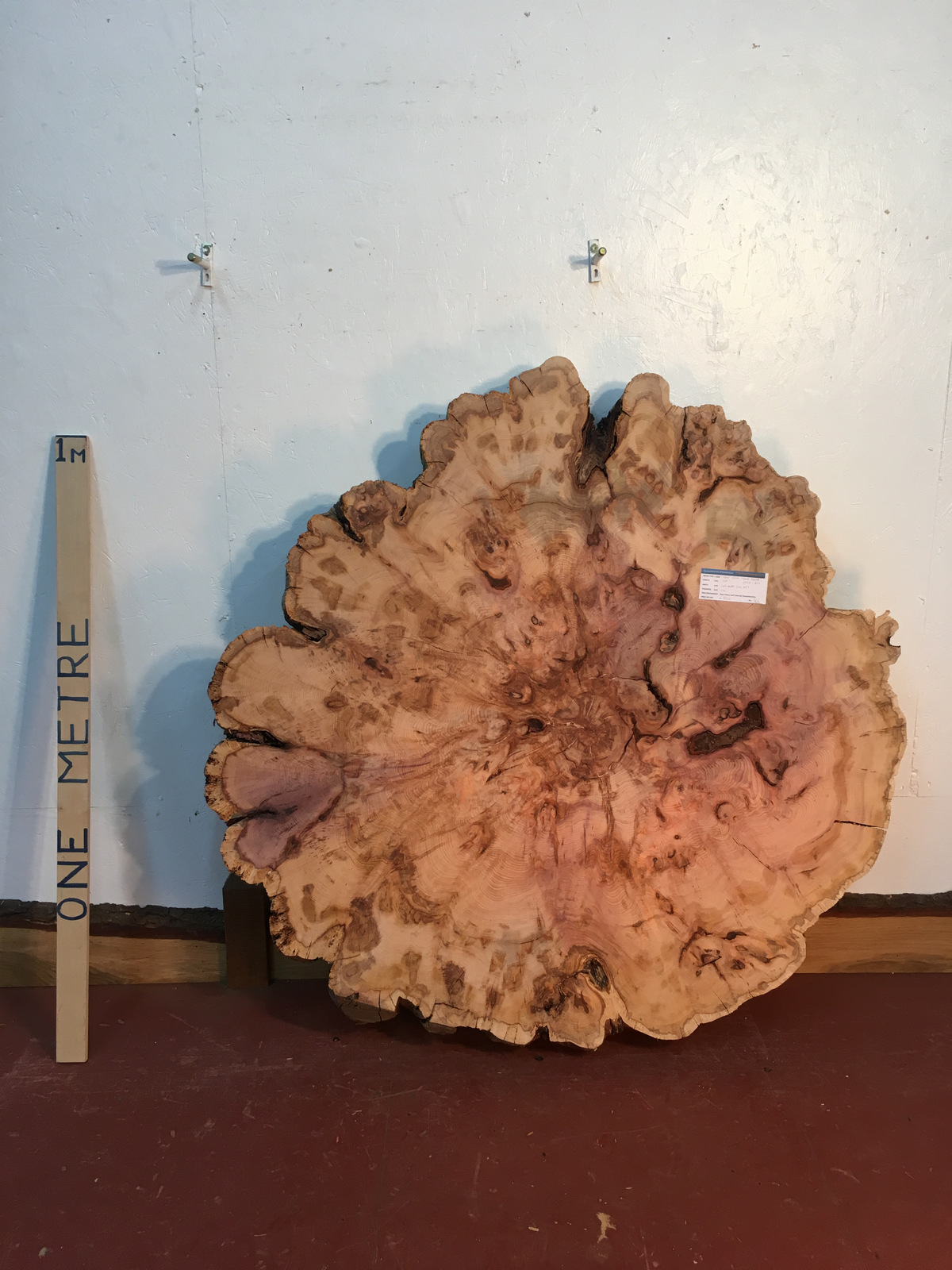YEW TREE SLICE Natural Waney Live Edge Slab Wood Board 0916-2-1