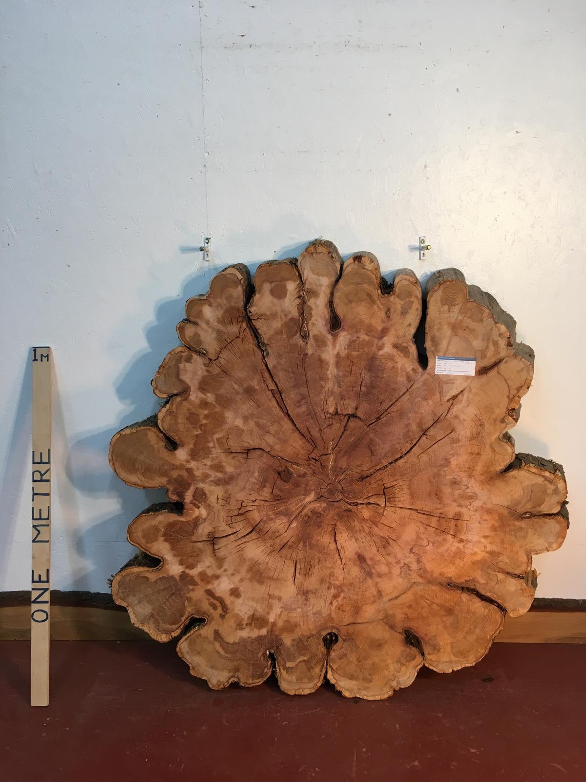 YEW TREE SLICE Natural Waney Live Edge Slab Wood Board 0917-5