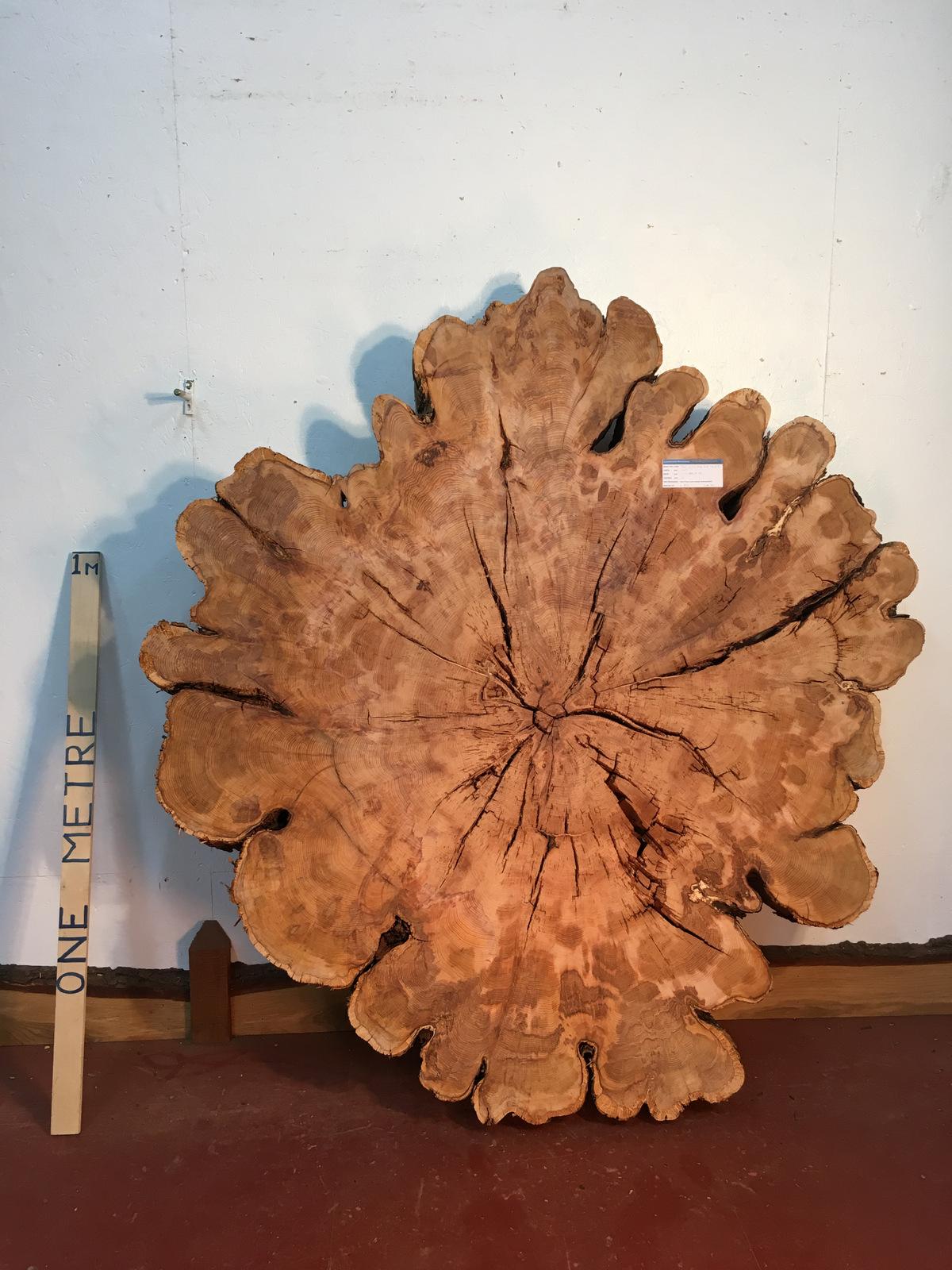 YEW TREE SLICE Natural Waney Live Edge Slab Wood Board 0917-6
