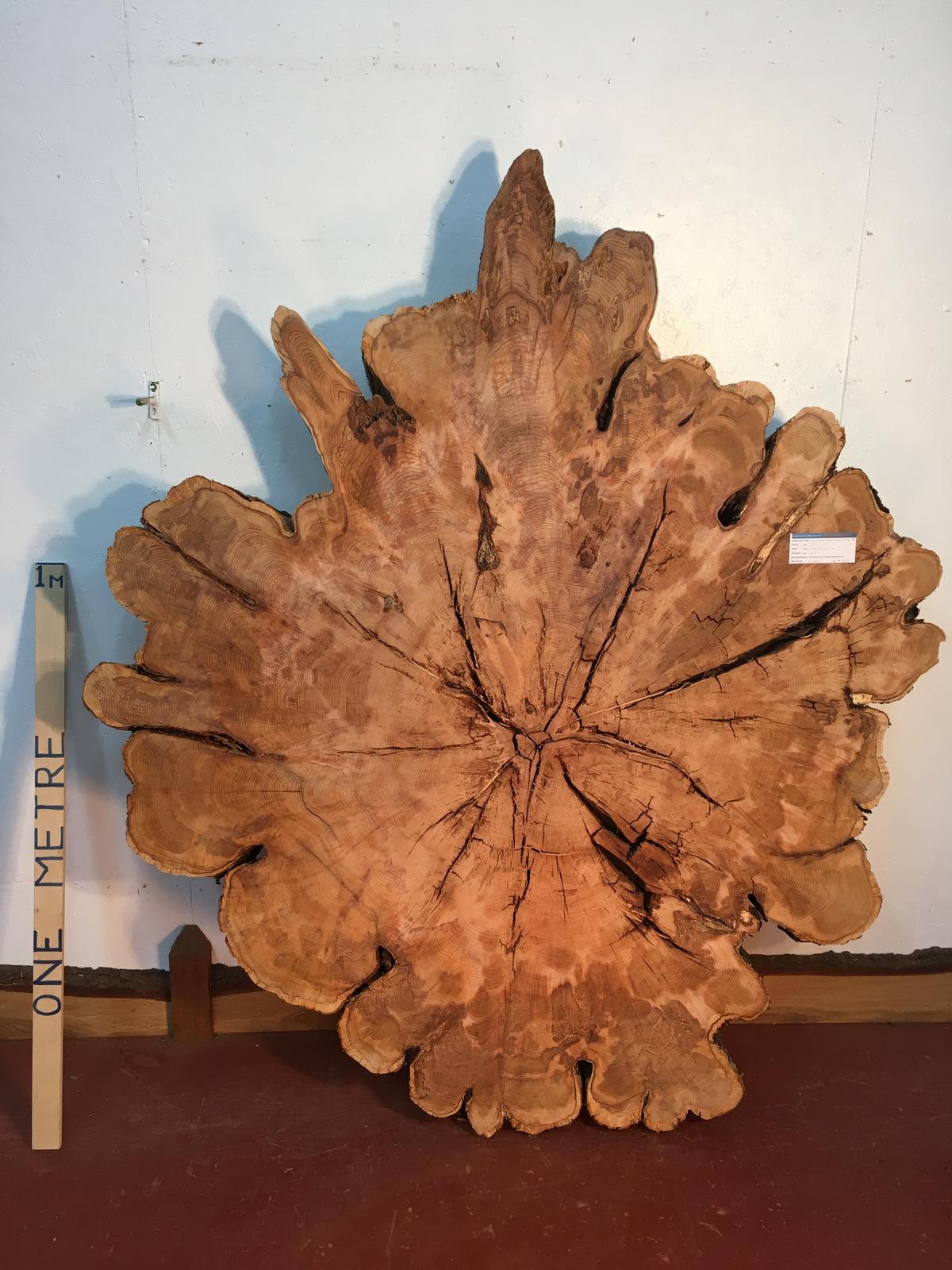 YEW TREE SLICE Natural Waney Live Edge Slab Wood Board 0917-7