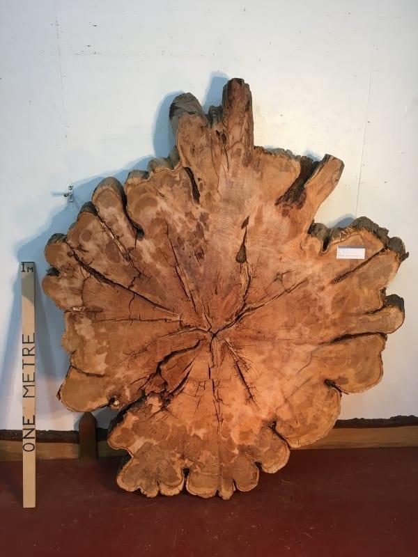 YEW TREE SLICE Natural Waney Live Edge Slab Wood Board 0917-8