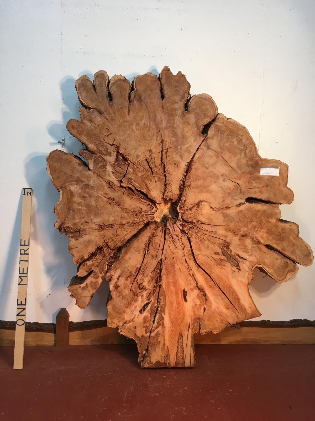 YEW TREE SLICE Natural Waney Live Edge Slab Wood Board 0917-9