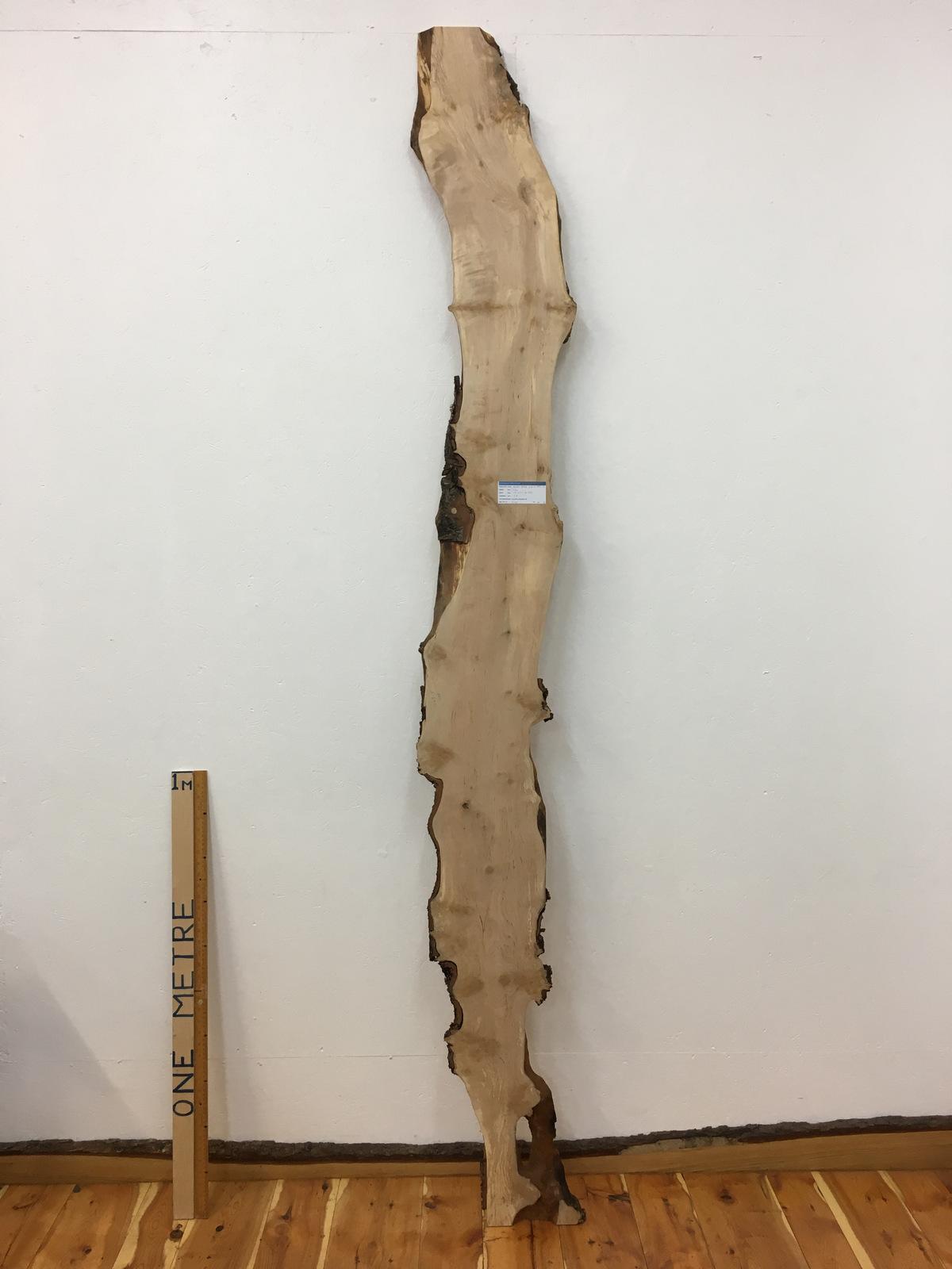 BURRY BIRCH Natural Waney Edge Slab Wood Board 1643-5