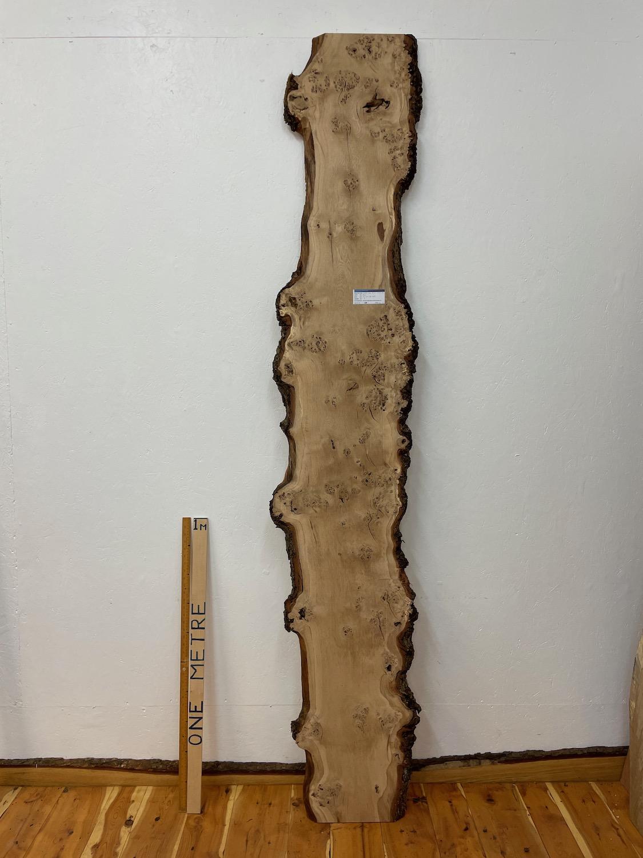 BURRY OAK Natural Waney Edge Slab Wood Timber Board 1561A-2A Thickness 3cm Kiln Dried Planed & Thicknessed Seasoned Hardwood Wildwood Wallart